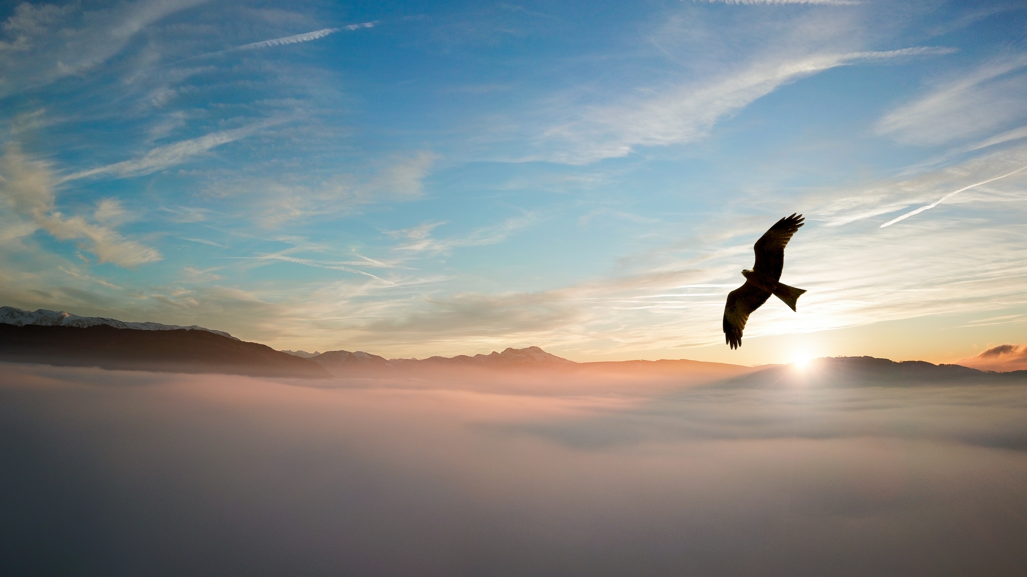 bird in the clouds